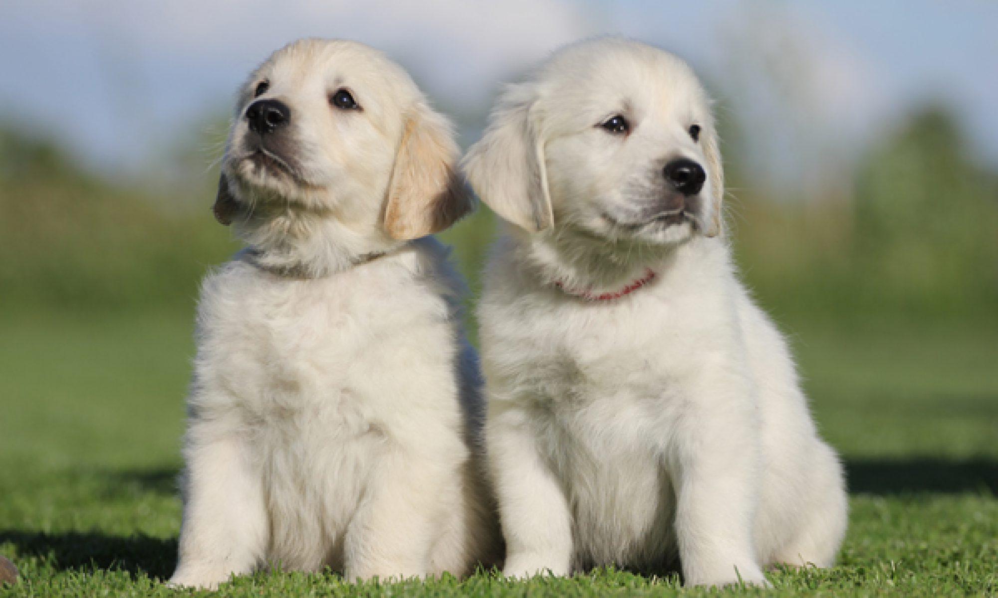 Fokken van honden